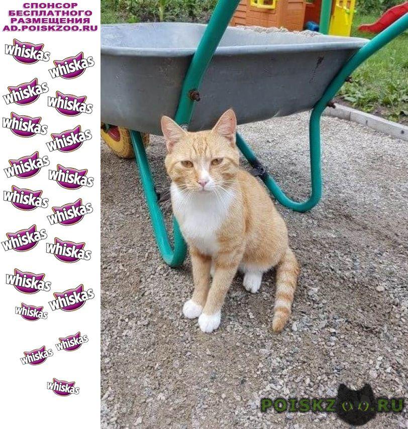 Найден кот г.Благовещенск (Амурская обл.)