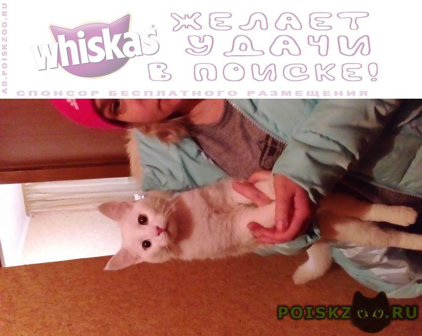Найден кот белый г.Аксай (Ростовская обл.)
