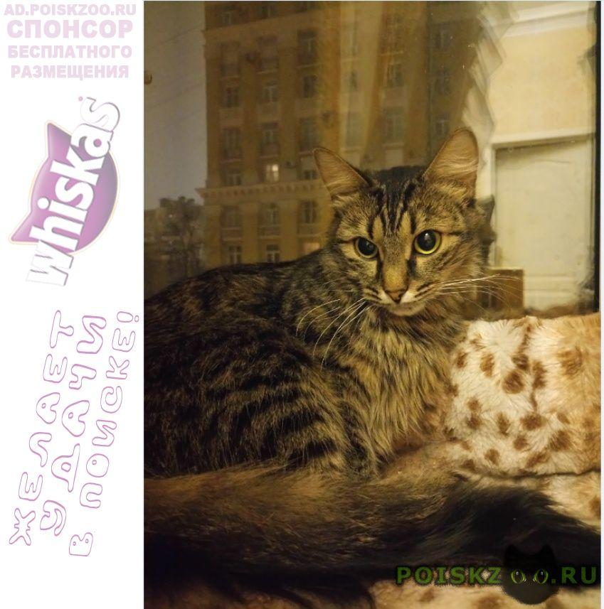 Найдена кошка таганская г.Москва