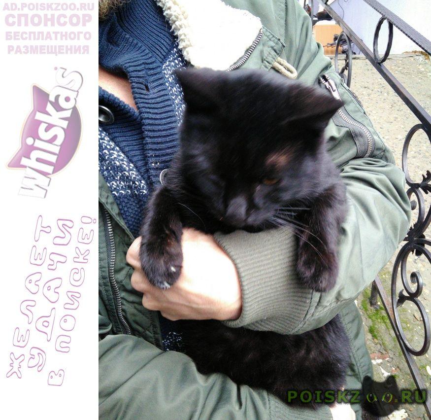 Найден кот г.Краснодар