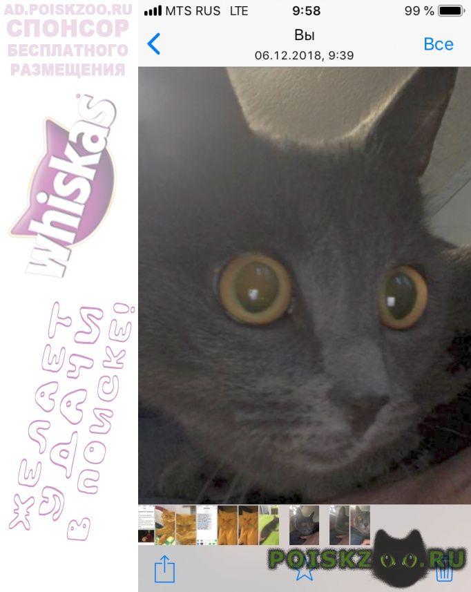Найдена кошка подкинули в подьезд г.Владимир