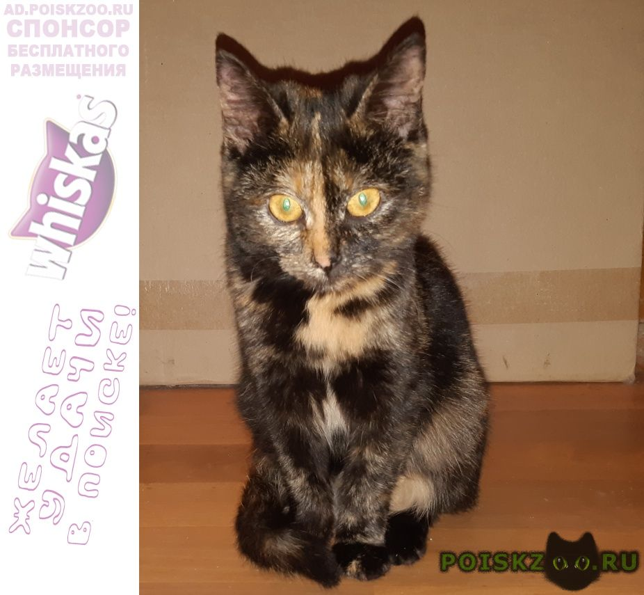 Найдена кошка у центрального рынка нашли кошечку г.Киров (Кировская обл.)