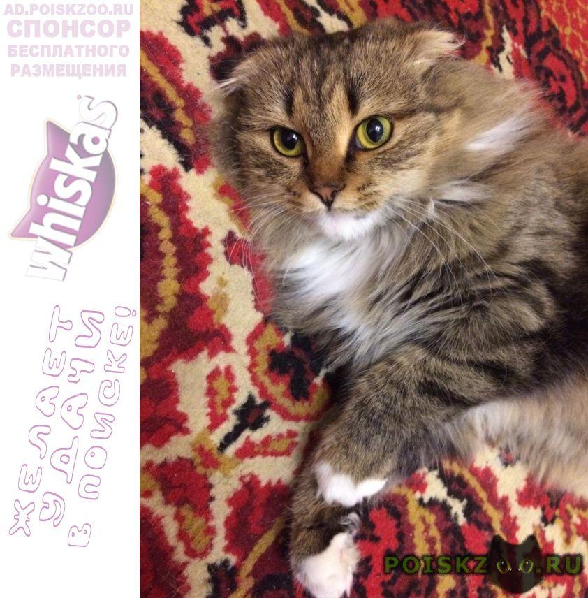 Найдена кошка г.Пенза