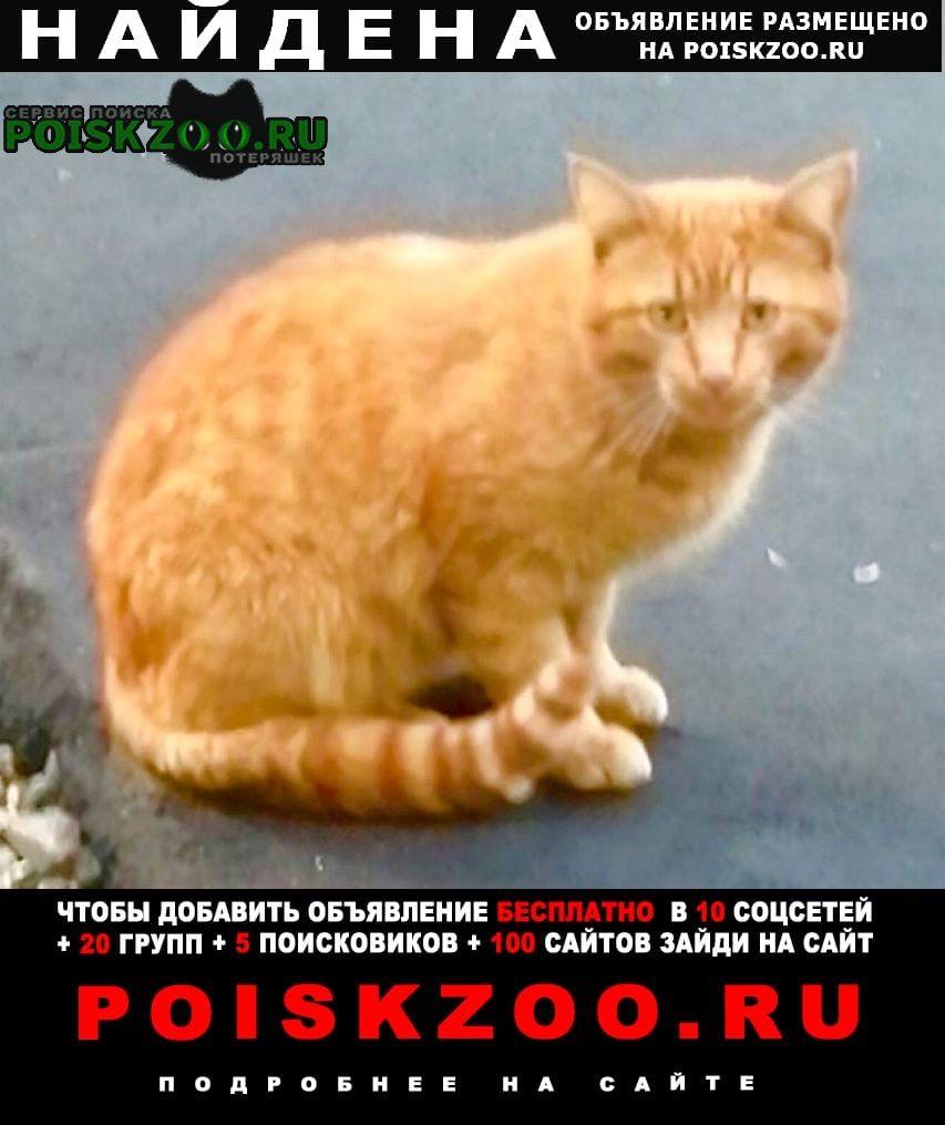Найдена кошка рыжий кот Москва