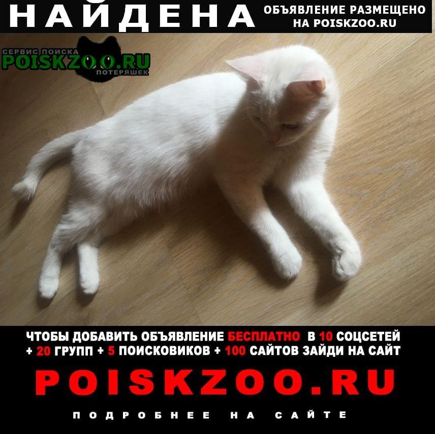 Найдена кошка Люберцы
