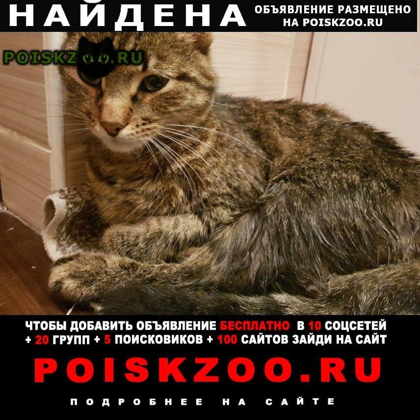 Найден кот на улице петина г.Вологда