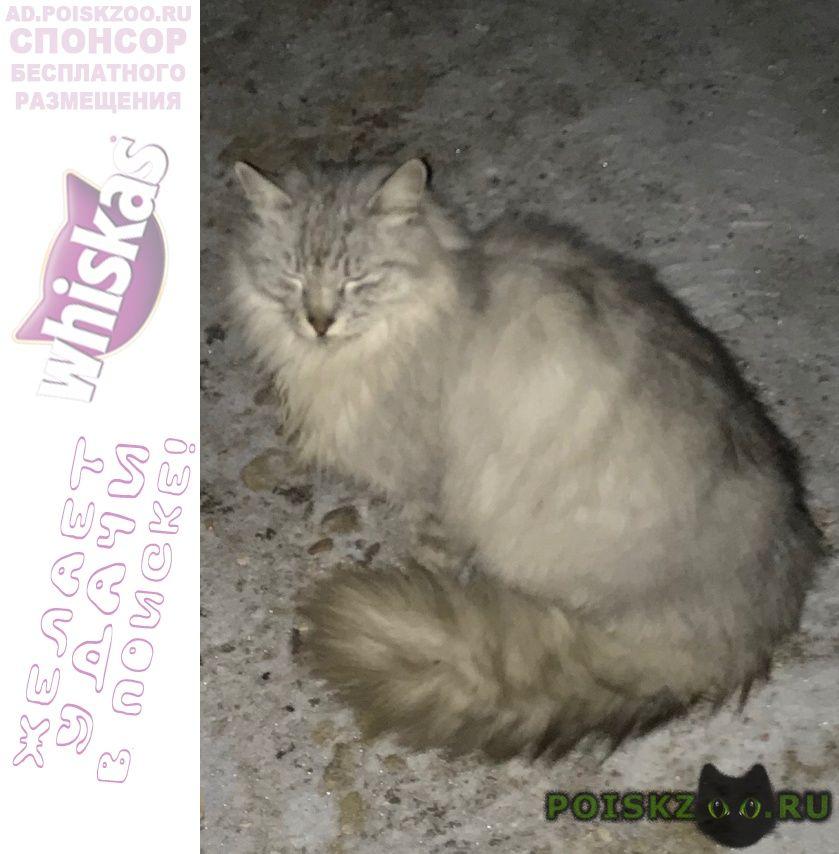 Найден кот снт маяк г.Талдом