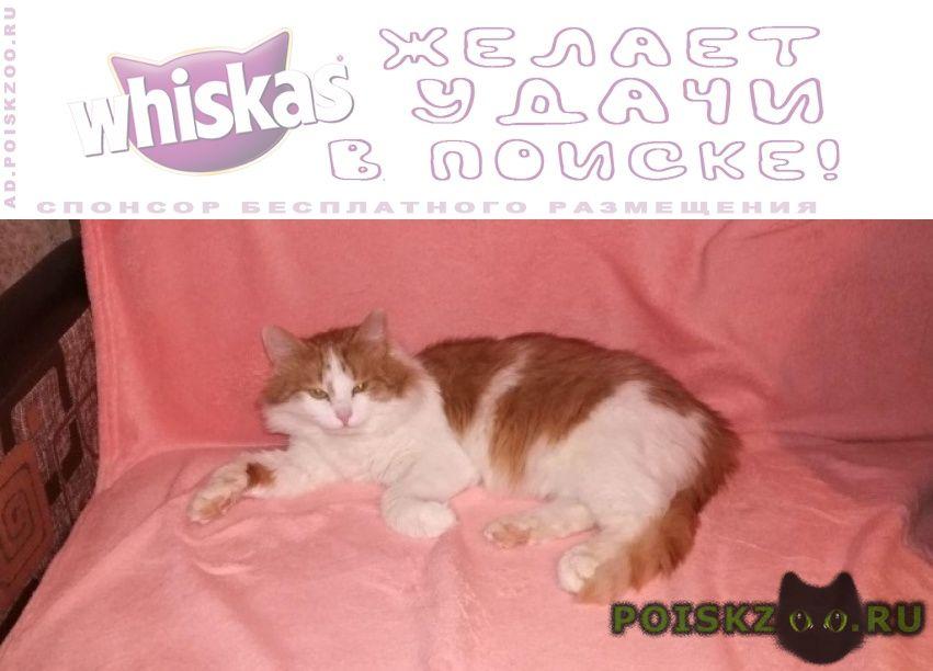 Найден кот г.Балашиха