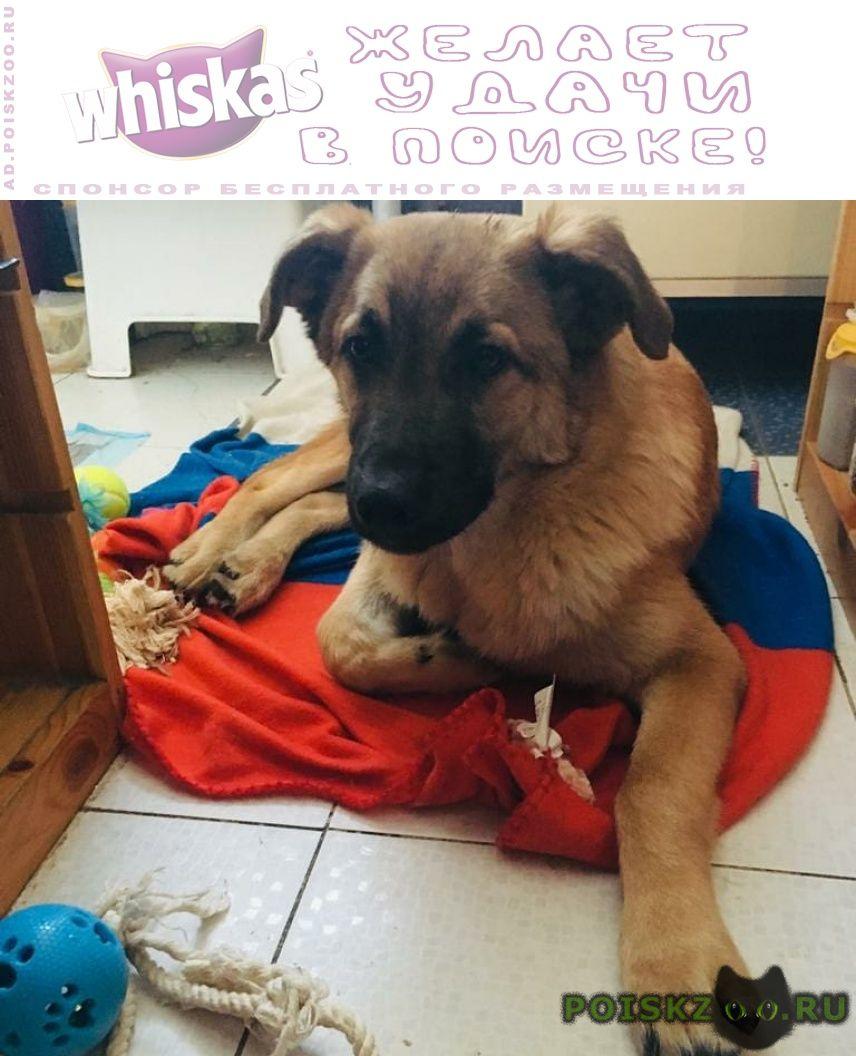Найдена собака кобель мальчик - месяцев г.Москва