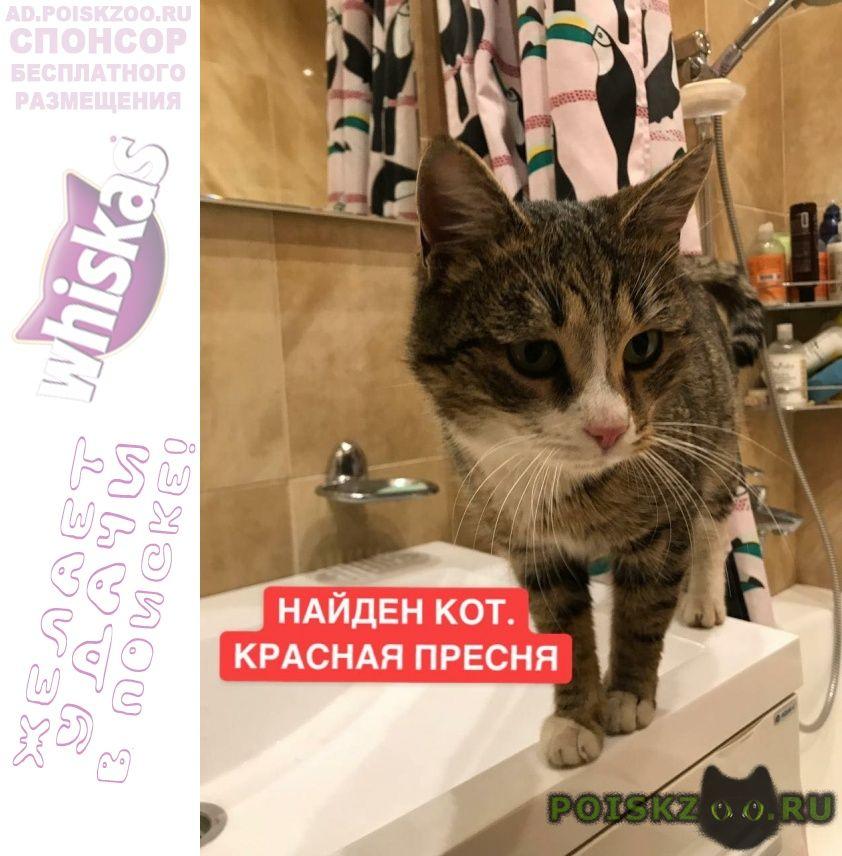 Найден кот. пресня г.Москва