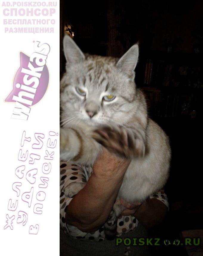 Найдена кошка кот.окрас персиковый. г.Саранск