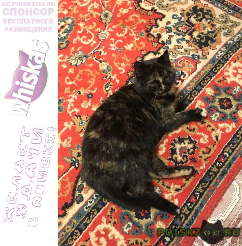Найдена кошка г.Курган