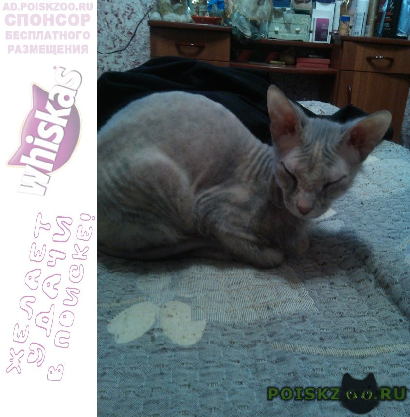 Найдена кошка г.Севастополь