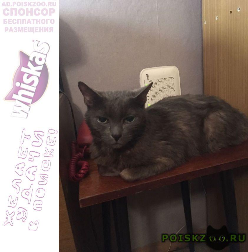 Найден котик г.Москва