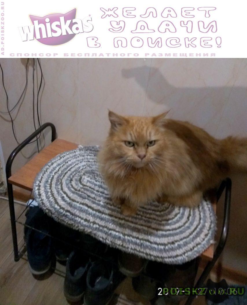 Найдена кошка г.Таганрог