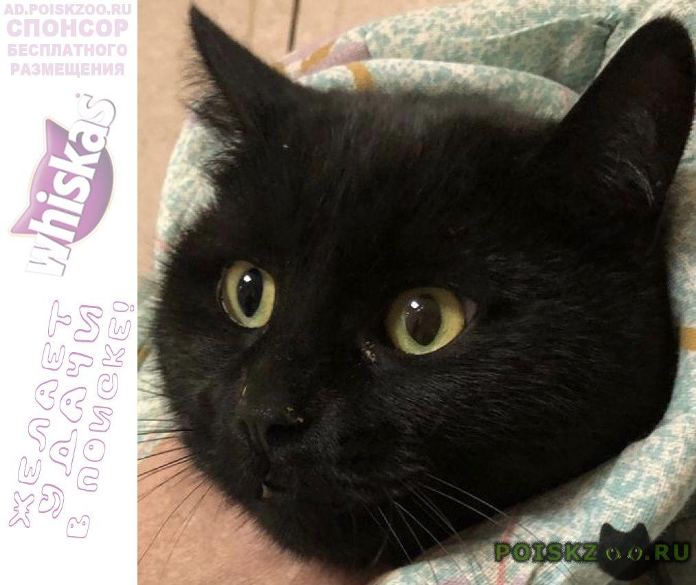 Найдена кошка чёрная с жёлтыми глазами г.Москва