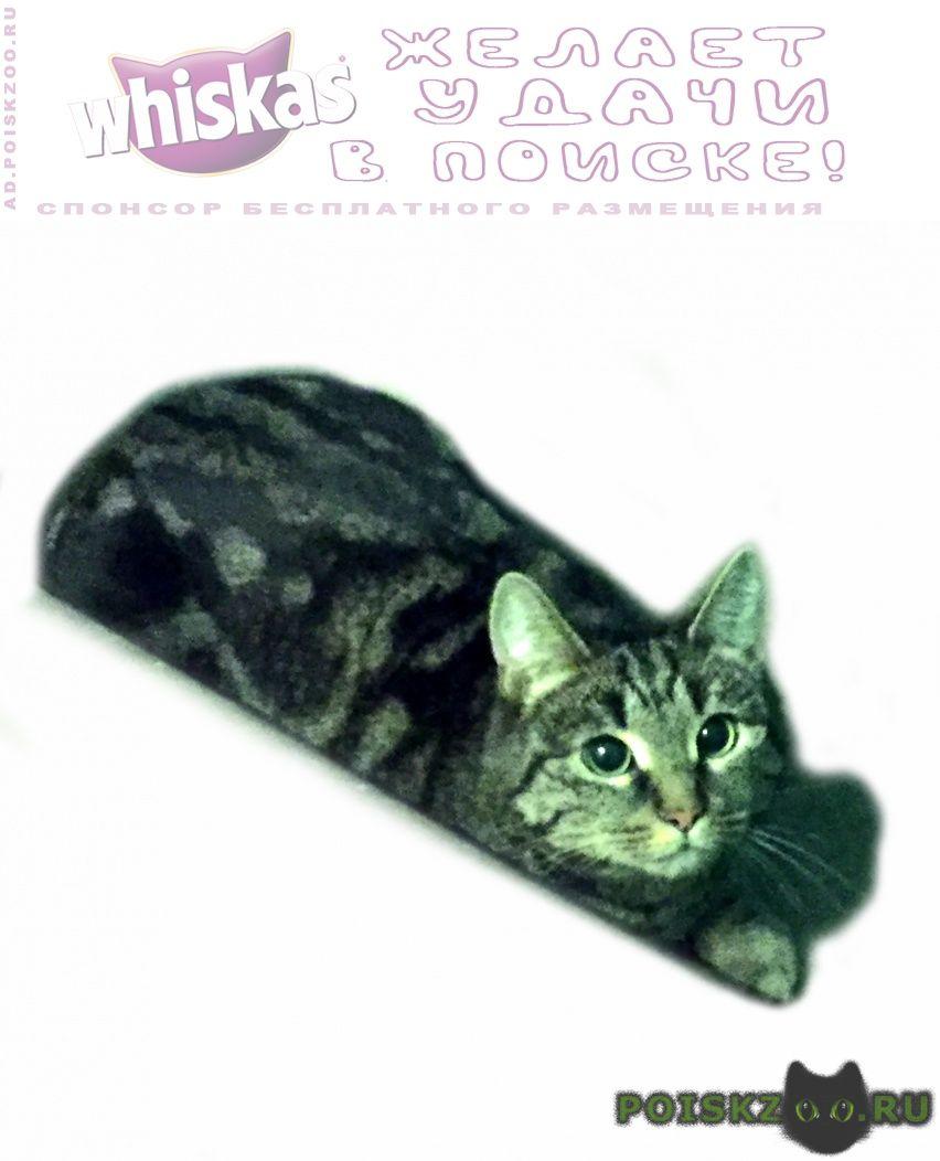 Найдена кошка кошечка ул.кутузова г.Москва