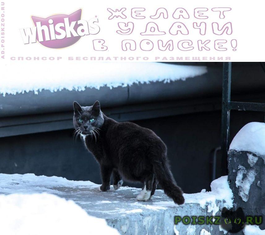 Найдена кошка кот г.Красногорск