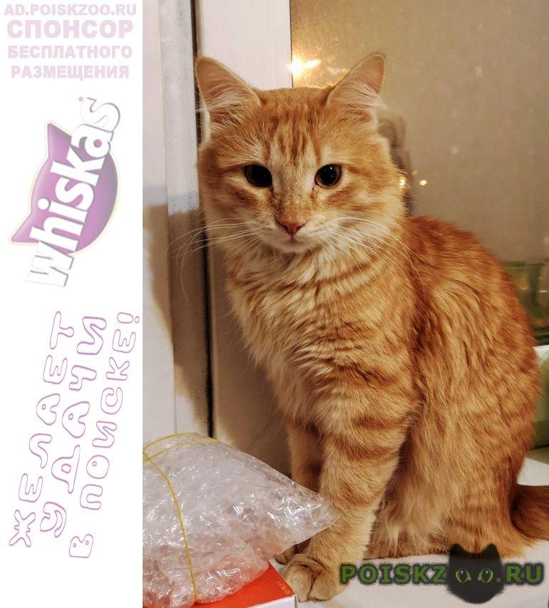 Найден кот рыжий г.Зеленоград