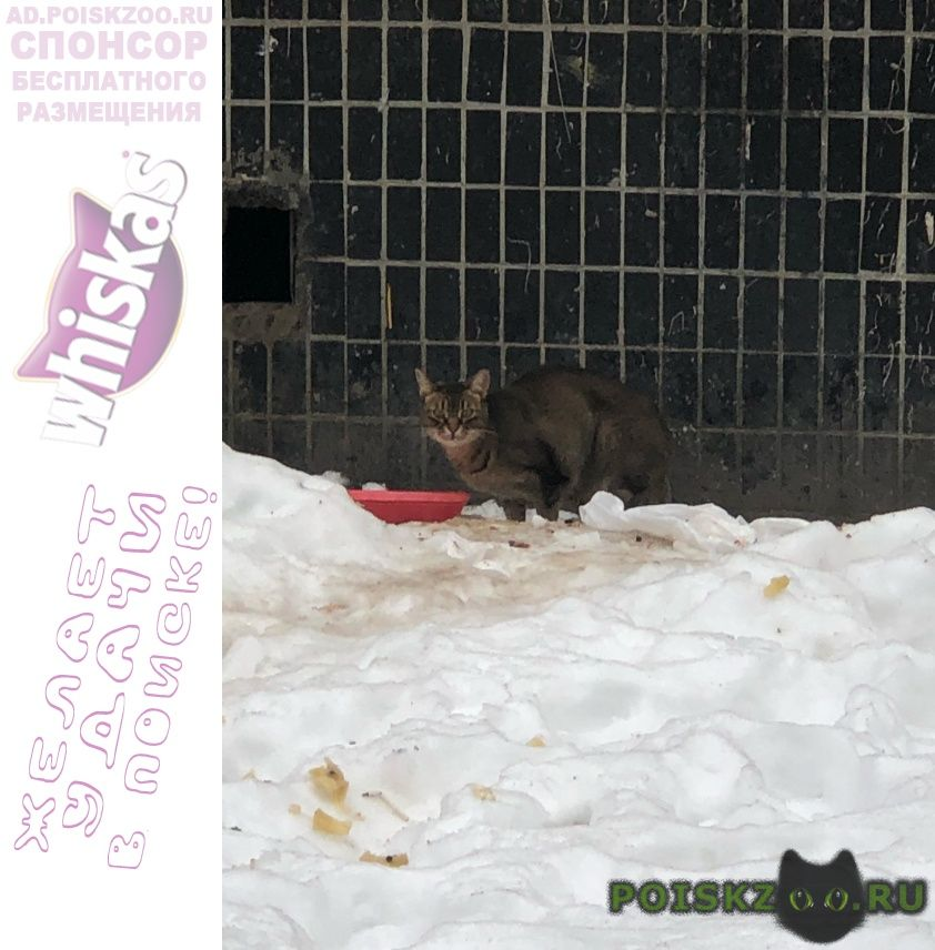 Найден кот замечен породы абиссинская г.Москва