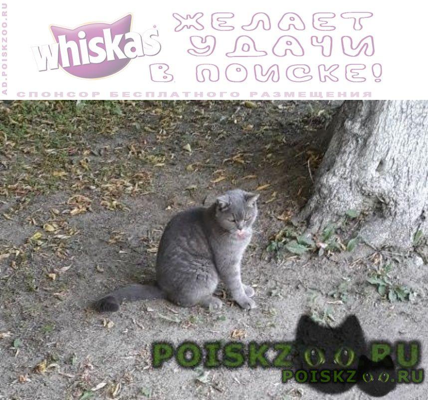 Найден кот серый ик г.Москва