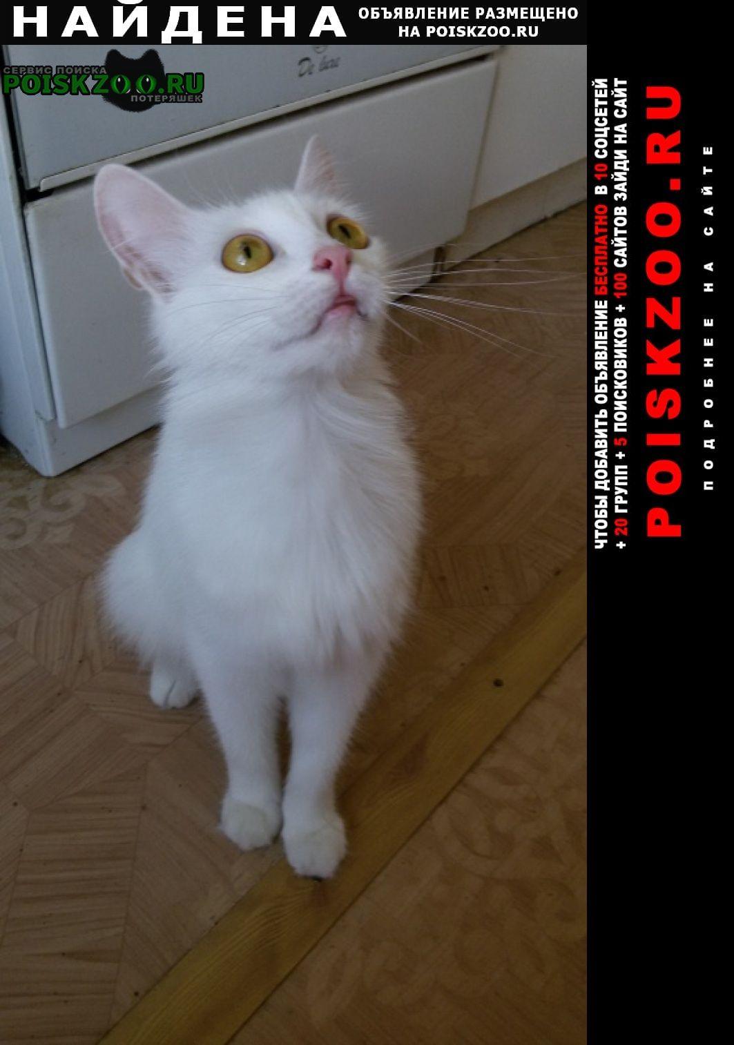 Найдена кошка в тзр г. ул.ополченская 28 Волгоград