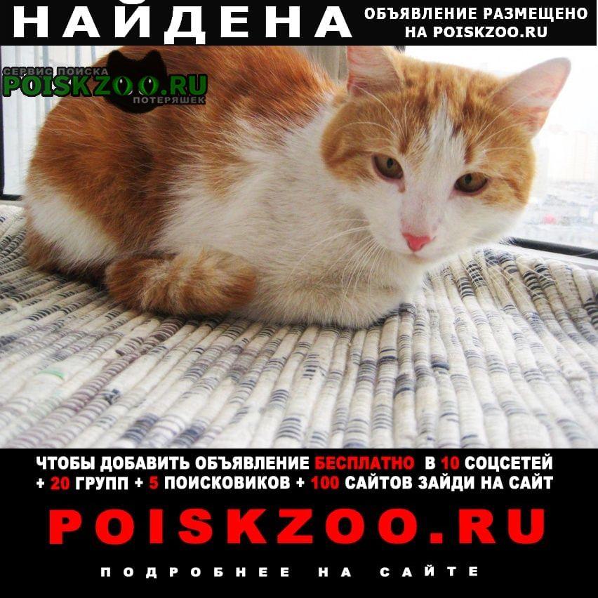 Найден кот молодой Санкт-Петербург