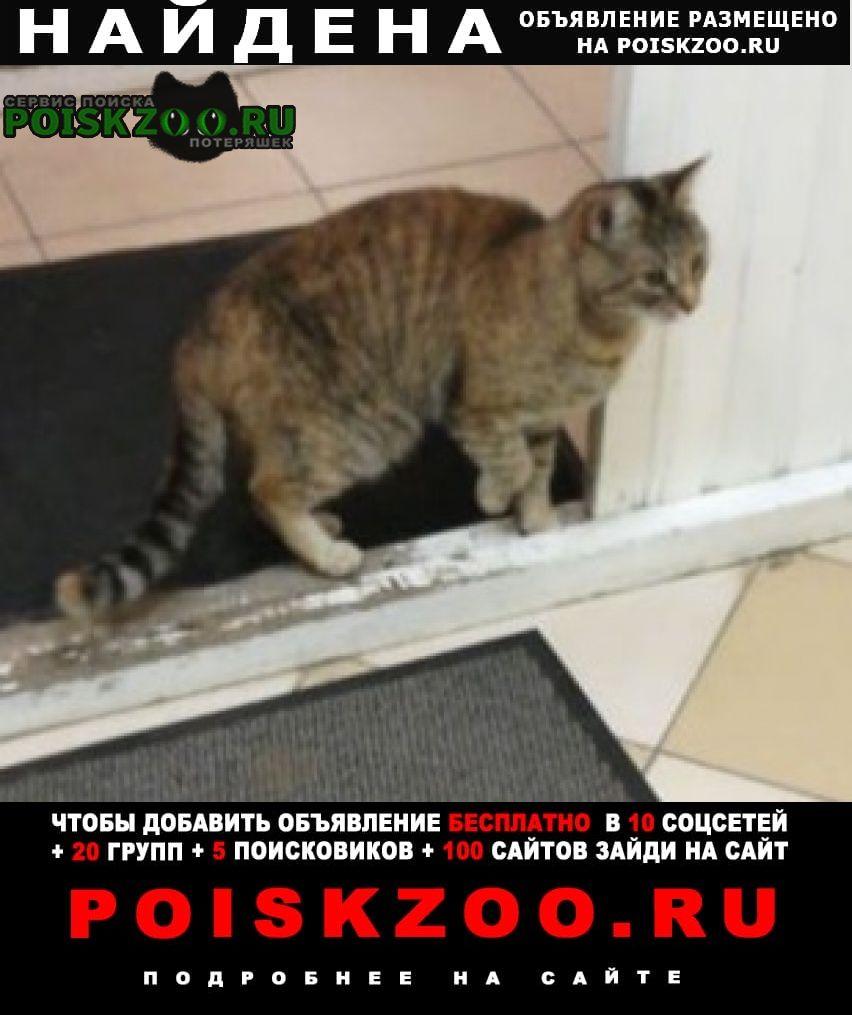 Найдена кошка ищем хозяев. Москва