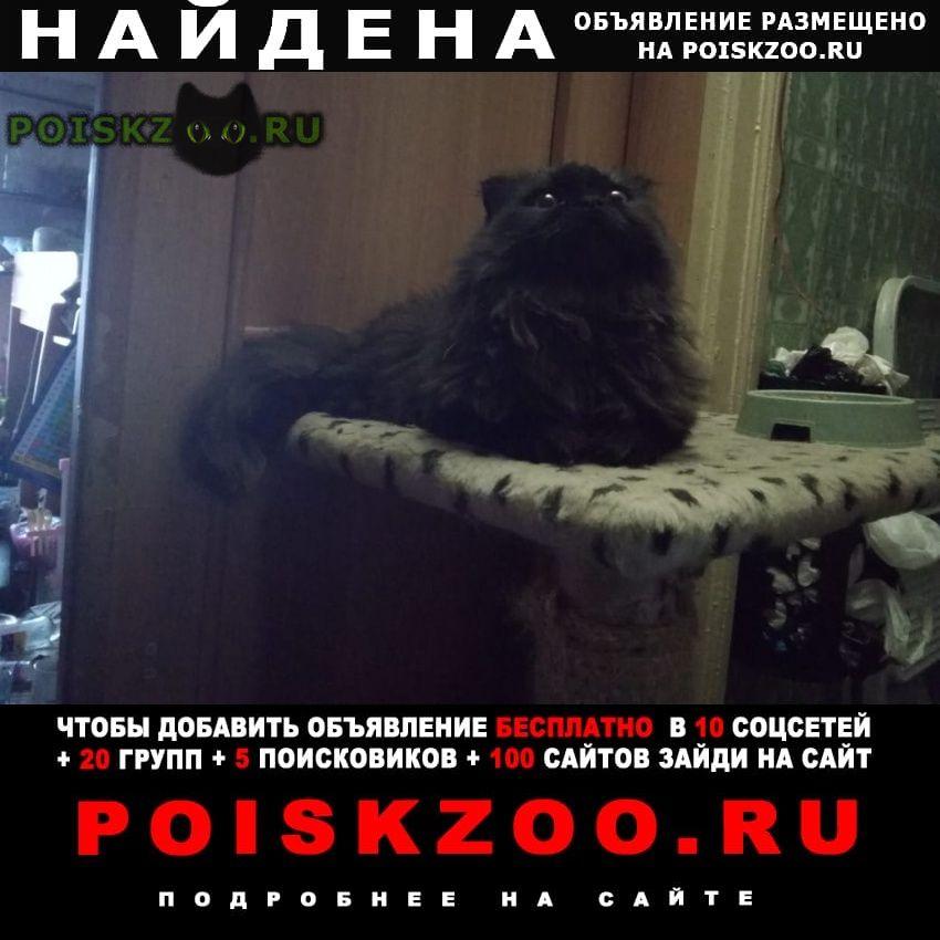 Найдена кошка метис перса Москва