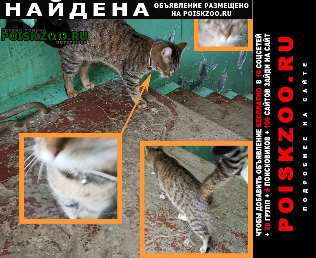 Найдена кошка бурая полосатая с бубенцом на черном ош. Тула