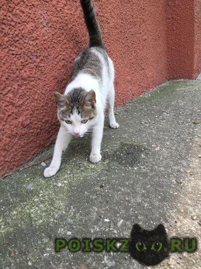 Найден кот   о-пес  г.Красногорск