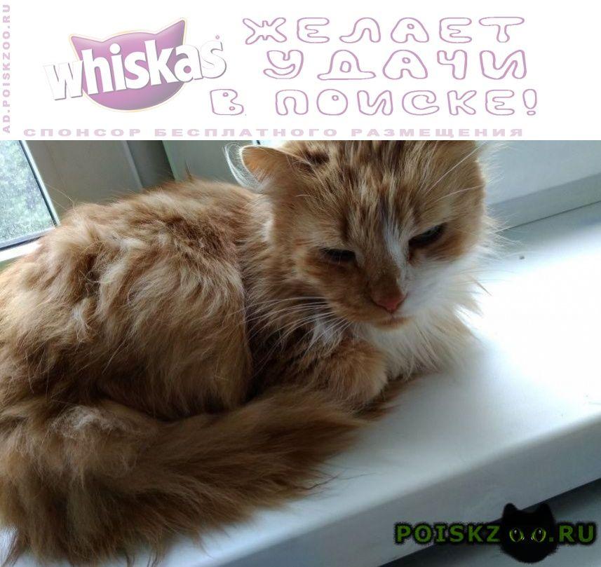 Найдена кошка рыжий перс г.Москва
