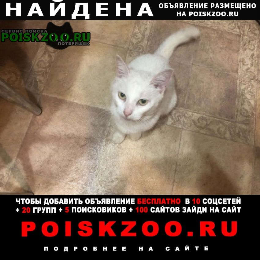 Найдена кошка белая Переславль-Залесский