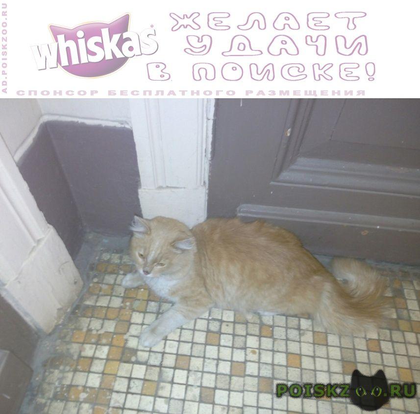 Найден кот персиковый г.Москва