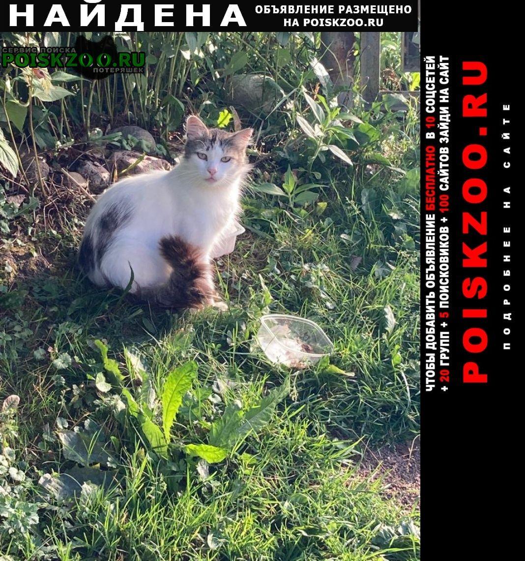 Найден кот Санкт-Петербург