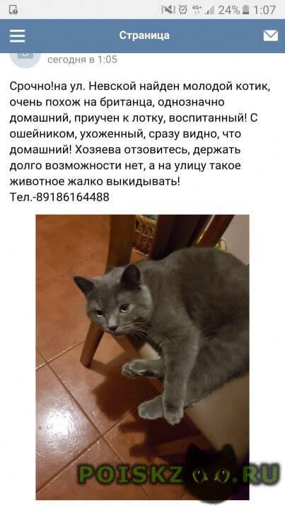 Найден кот г.Сочи
