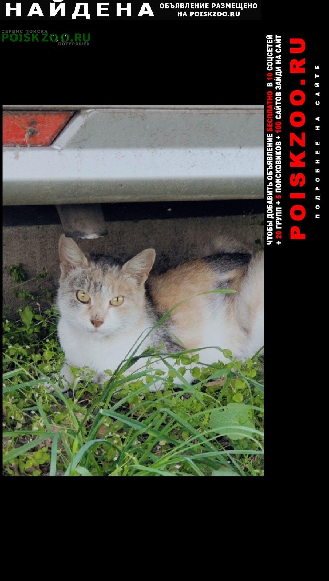 Найдена кошка трехцветка Москва