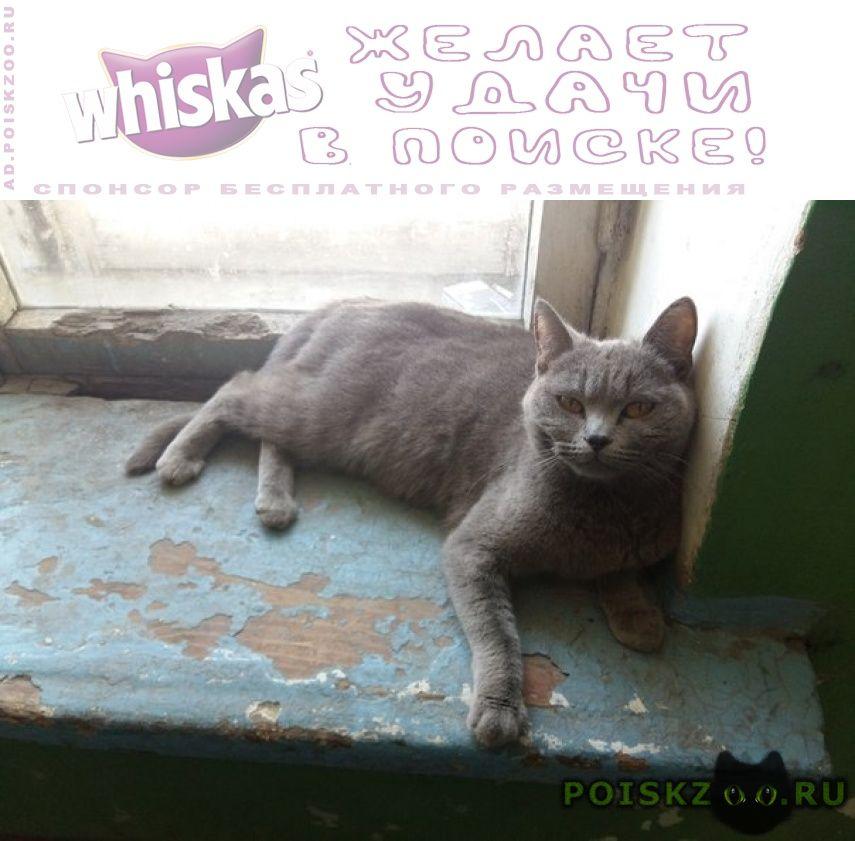 Найдена кошка серая возможно британка г.Казань