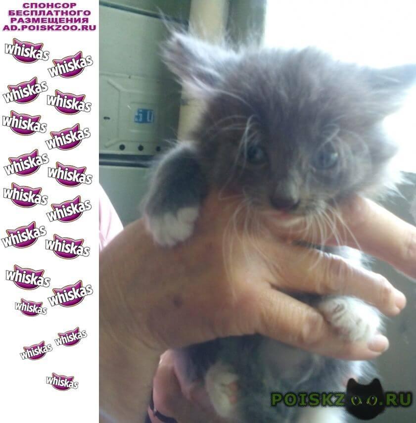 Найдена кошка г.Рыбинск