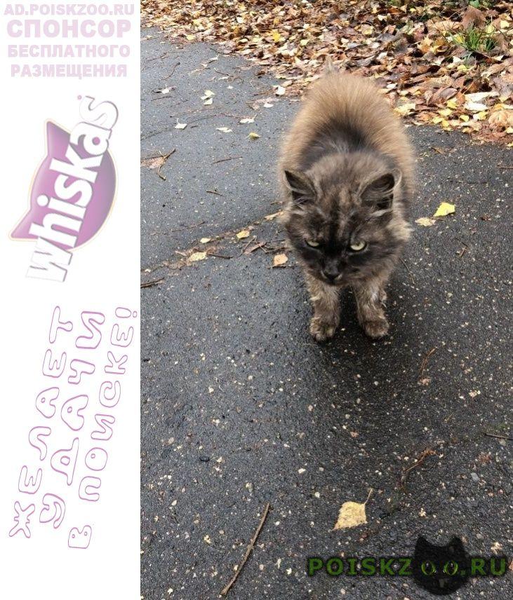 Найдена кошка красный ошейник г.Москва