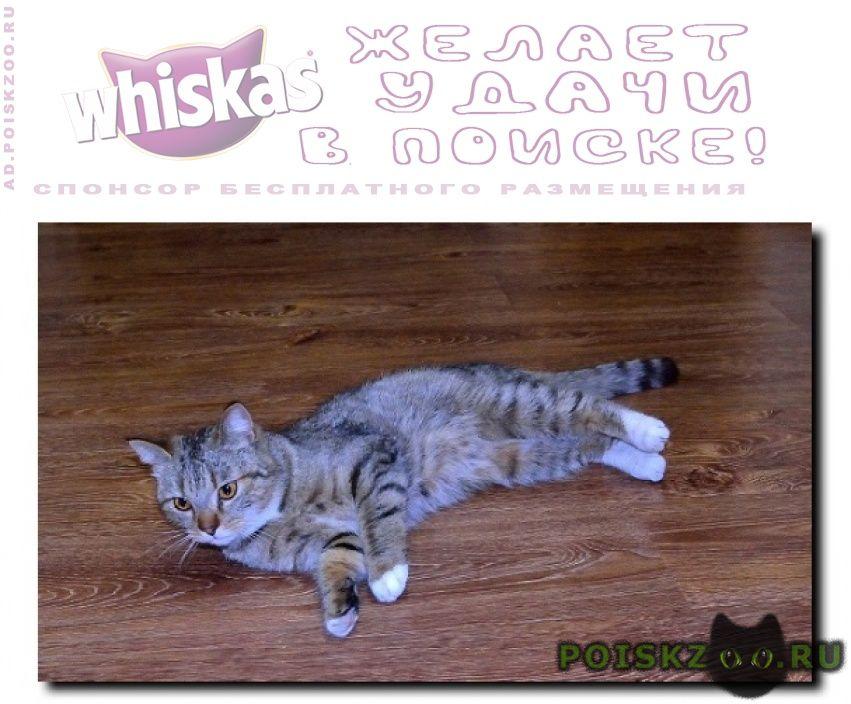 Найдена кошка г.Новороссийск