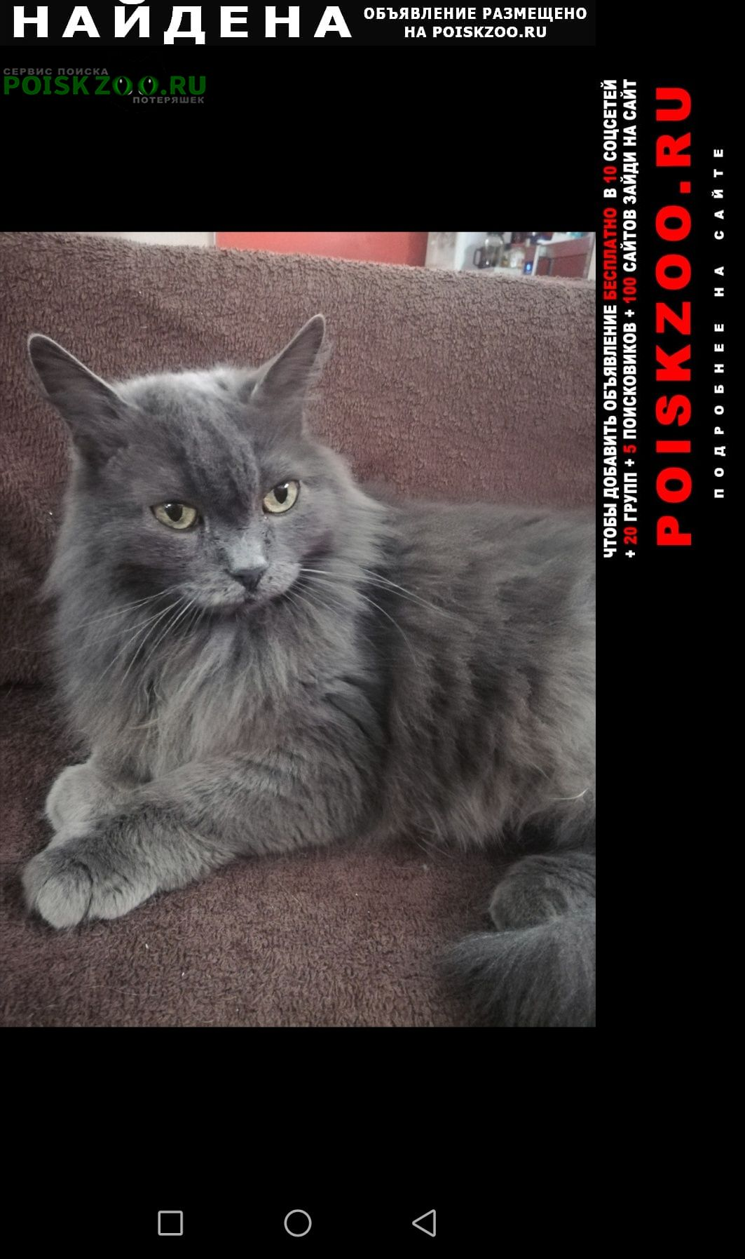 Найдена кошка потеряшка Таганрог