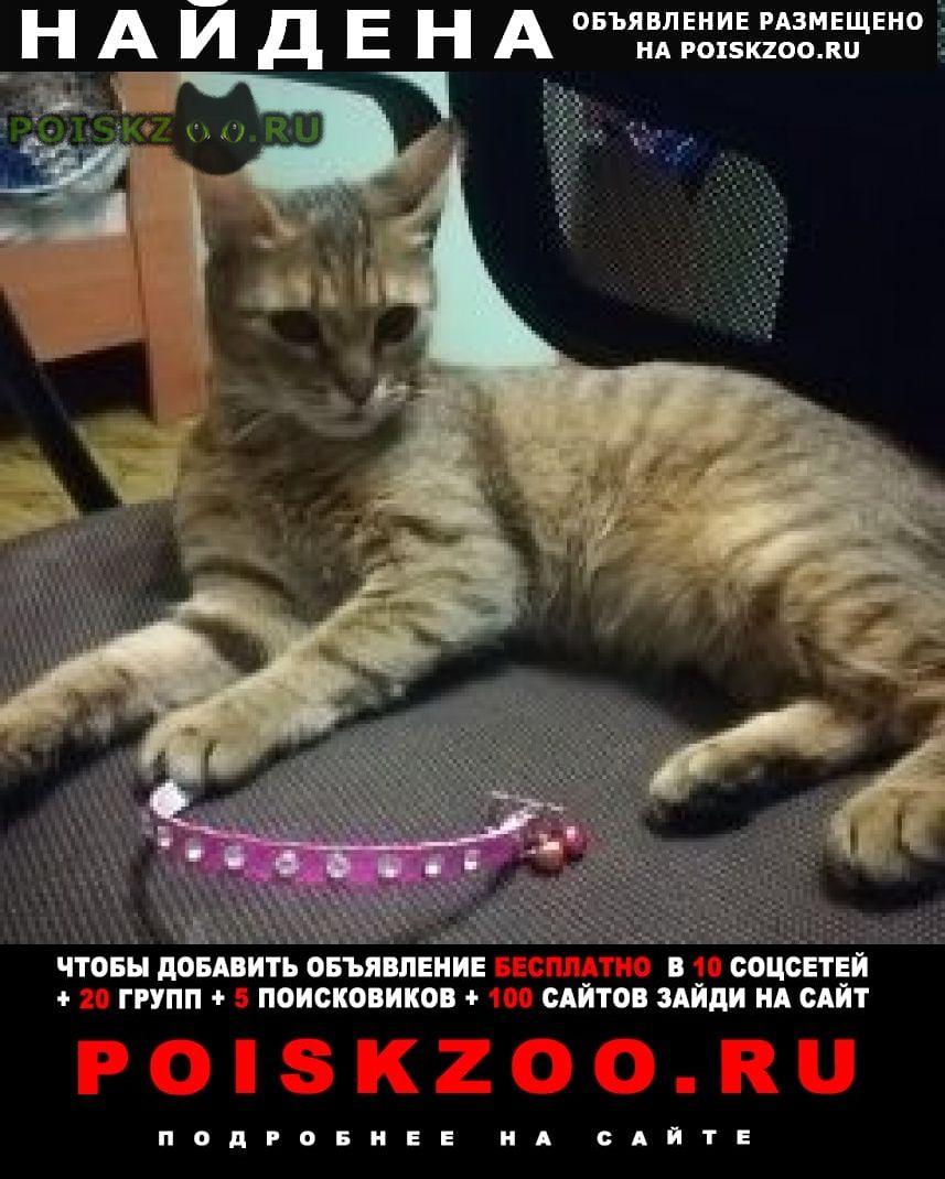 Найдена кошка с розовым ошейником г.Севастополь
