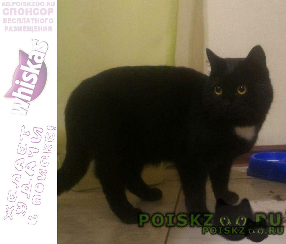 Найдена кошка г.Абакан Хакасия
