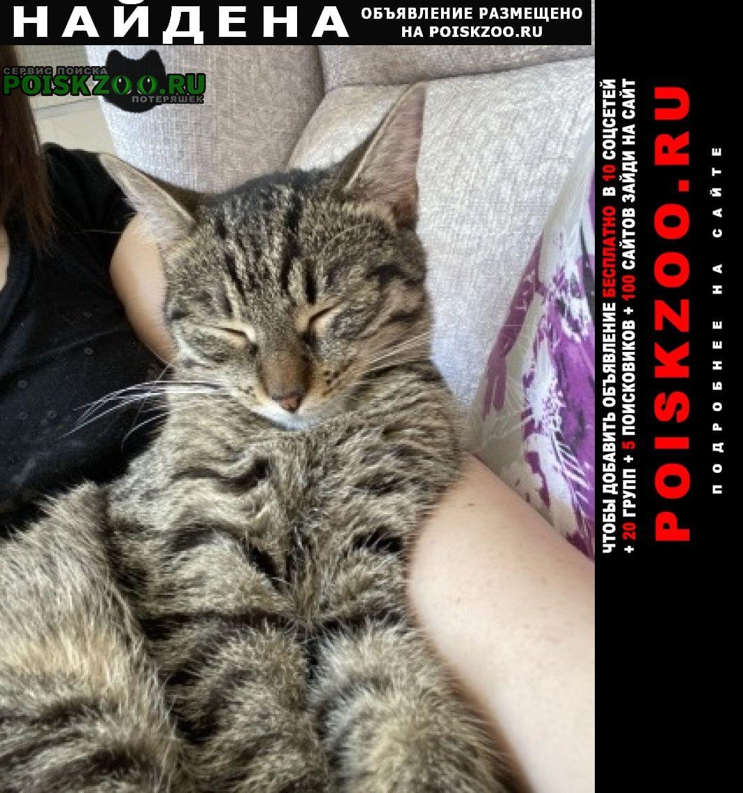 Москва Найдена кошка молодая кошечка
