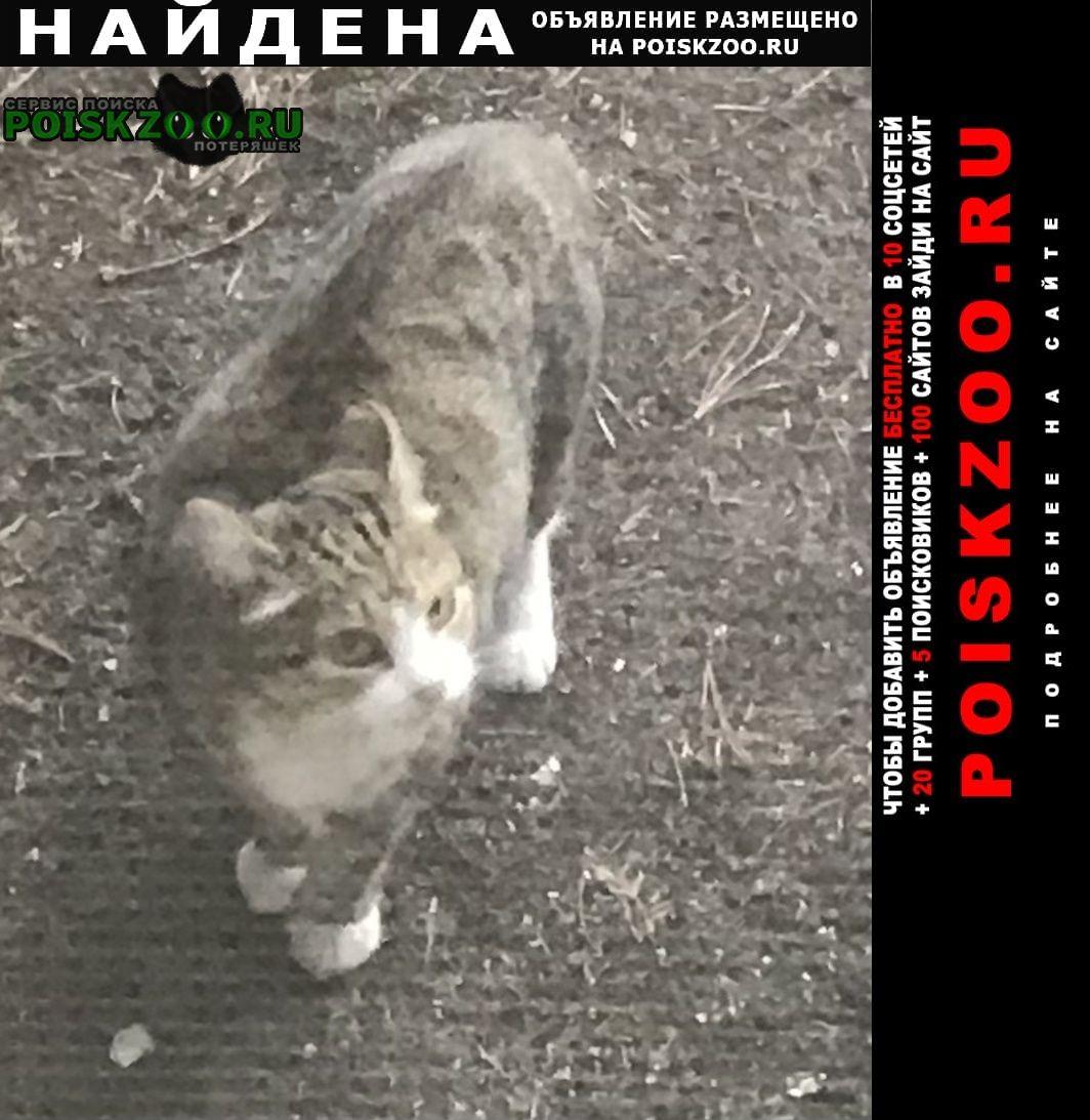 Найдена кошка или кот Красноярск