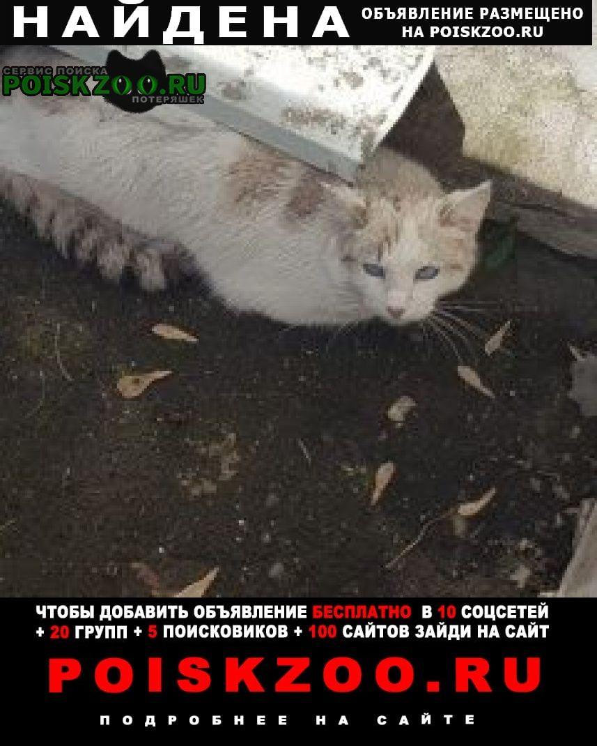 Найдена кошка в районе бутырского вала, ул.лесная Москва