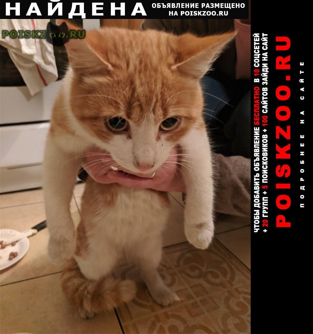 Найдена кошка домашняя г.Санкт-Петербург