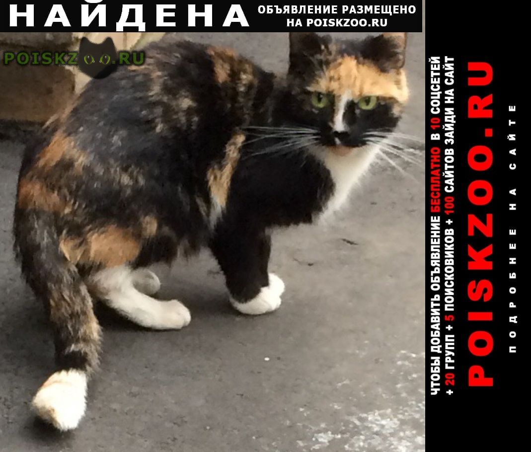 Найдена кошка черная с рыжими и белыми пятнами г.Москва