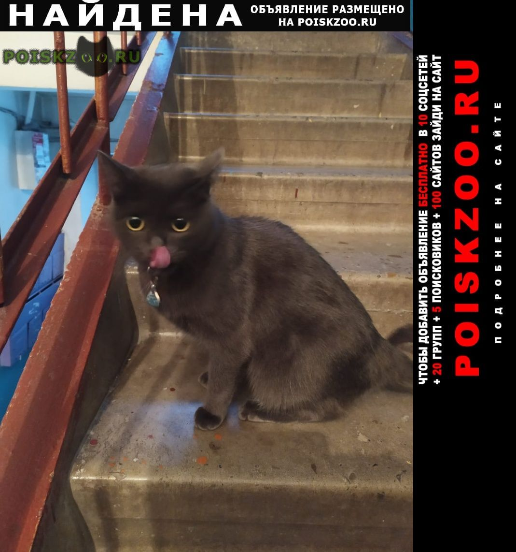 Найдена кошка г.Барнаул